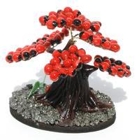 Huayruro seed tree