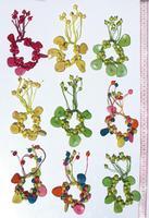 Bracelets of tagua